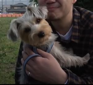 抱かれている犬