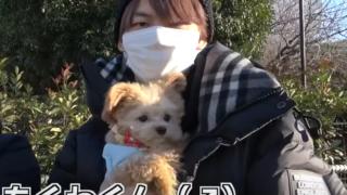 ジュキヤの犬