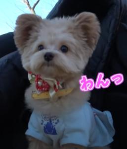 ジュキヤの犬2